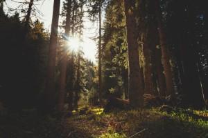 intermediate-mindfulness